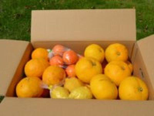 画像1: 旬の果物セット (1)